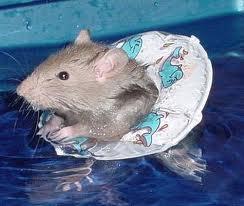 rats deserting sinking ship