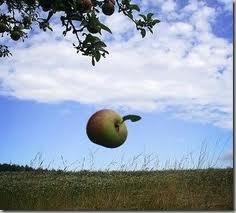 apple falls from tree